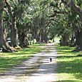 The road to the slave quarters