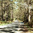 Cape Otway Road