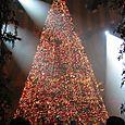 Dolphin Hotel Lobby - Christmas Tree