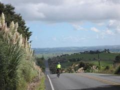Heading towards Ruawai