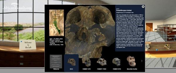 African_Fossils_Dot_Org